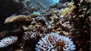 Coral Reefs: Feeding And Protecting Us