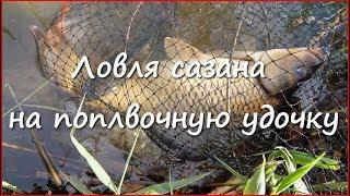 Как поймать сазана на удочку с берегами
