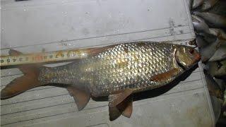 Зимняя рыбалка на Балхаше, вобла по последнему льду