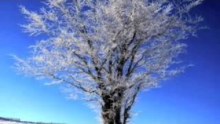 White Winter Hymnal- Fleet Foxes