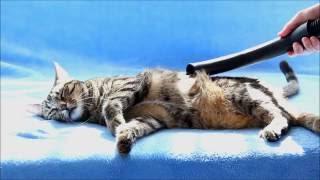 Смотреть онлайн Неправильный кот любит, когда его пылесосят