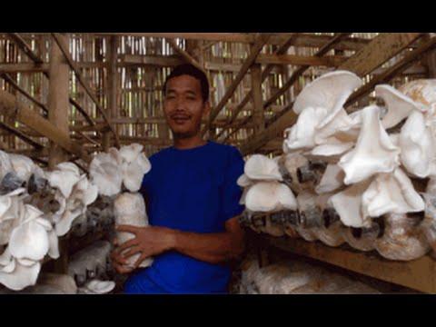 Video Tutorial Lengkap Bisnis Budidaya Jamur Tiram