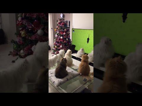 Занимательное видео для котов