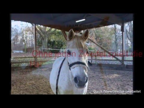 Atemwegserkrankungen beim Pferd