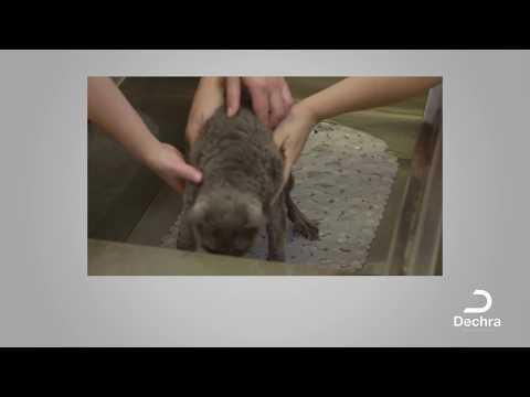 Wie man die Katze richtig wäscht