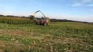 Divočáci u kukuřice II.
