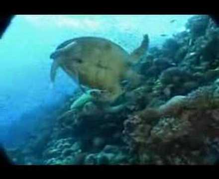 Turtels, Rotes Meer allgemein,Ägypten