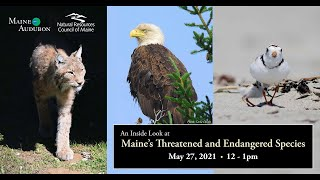 An Inside Look at Maine's Threatened & Endangered Species (Pre-recorded Webinar)