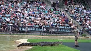 Robert Irwin Solo Croc Show! With Bluey the Crocodile ft. a Bin Chicken
