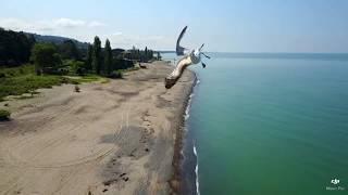 чайка грациозно ушла от воздушного столкновения с квадрокоптером в небе над Черным морем