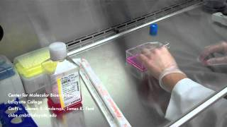 How to Change Cell Culture Media