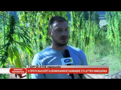 Η πρώτη καλλιέργεια βιομηχανικής κάνναβης στη Δυτική Μακεδονία | 17/9/2019 | ΕΡΤ
