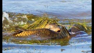 РЫБАК НАШЕЛ МЕСТО НЕРЕСТА ОГРОМНОГО КАРПА ! ВСЕ ПОПАДАЛИ ОТ ЕГО НАХОДКИ Вот это Рыбалка весной 2018