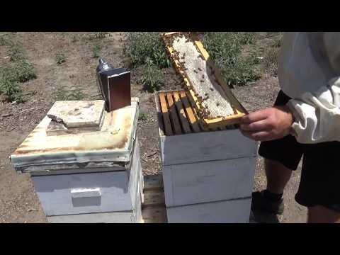 очередной осмотр семей на наличие товарного мёда 19/06/2017