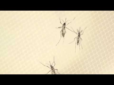 Virus del papiloma humano transmision
