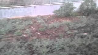 preview picture of video 'ALBERI RECISI STAZIONE DI VALENZANO.'