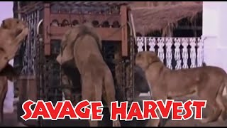 Savage Harvest Set in Kenya Africa during a drought when lions began eating people FULL MOVIE