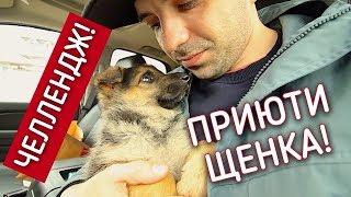 Нашел семью щенку! Опухла морда. Улетаю в Москву.