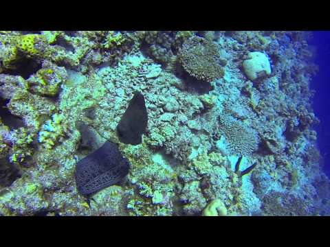 Akassia Moray, Akassia Diving Hausriff,Ägypten