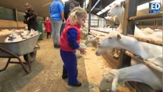 preview picture of video 'Geitenkijkdagen van start in Veldhoven'