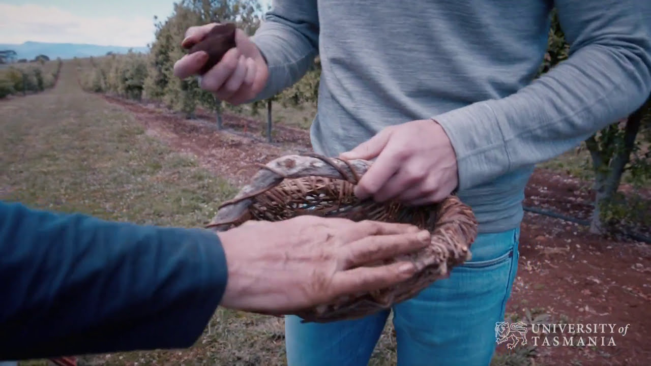 Play video: Truffle gold in Tassie