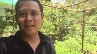 LÀM BÁNH TÉP ĂN BỊ MƯA QUÁ LỚN | 7 Thuận #30