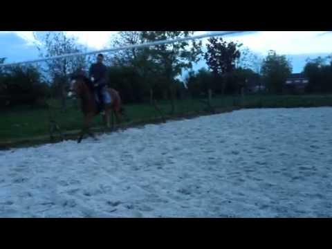 Acheter le stimulant de cheval pour les femmes à oulyanovske