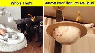 Cats Cracked Us Up - Funny Cat Pics
