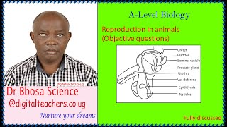 Reproduction in animals objective questions (A-level)