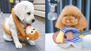 Baby Dogs - Cute And Funny Dog Videos Compilation #22   Aww Animals