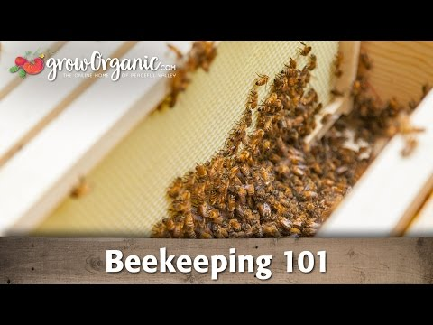 Beekeeping For Beginners - Hive Set Up