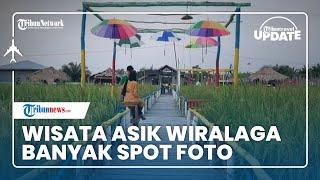 Sawah Disulap Jadi Tempat Seru nan Estetik di Wisata Asyik Wiralaga, Banyak Spot Foto hingga Gazebo