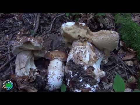 Che sia possibile fare con unghie che sopportano un fungo
