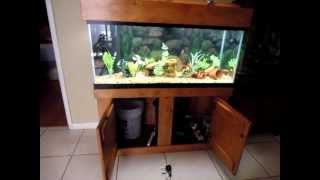 75 gallon Fresh water Aquarium with Fluval fx5 canister filter connected on a built in overflow tank | Kholo.pk