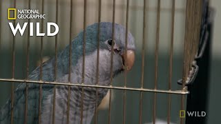 A Bird With a Lacerated Leg | The Wild Life of Dr. Ole
