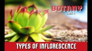 Botany Grade 11 | Morphology Of Angiosperms | Inflorescence | Floral Arrangement | Section 12