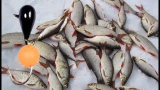 Зимняя рыбалка на реках 2019