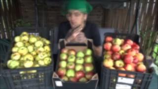 Jabłka - przygotowanie soku