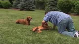 Dogs 101 Visla