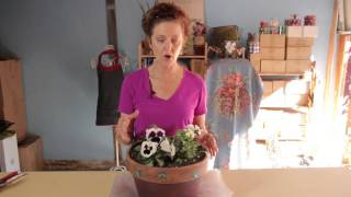 Winter Pansy Care : Gardening With Flowers & Succulents