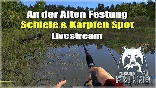 Russian Fishing 4:  An der Alten Festung Weißer Amur & Schleie | Livestream Deutsch