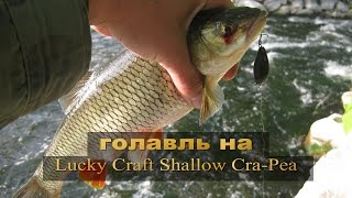 Shallow cra pea lucky craft