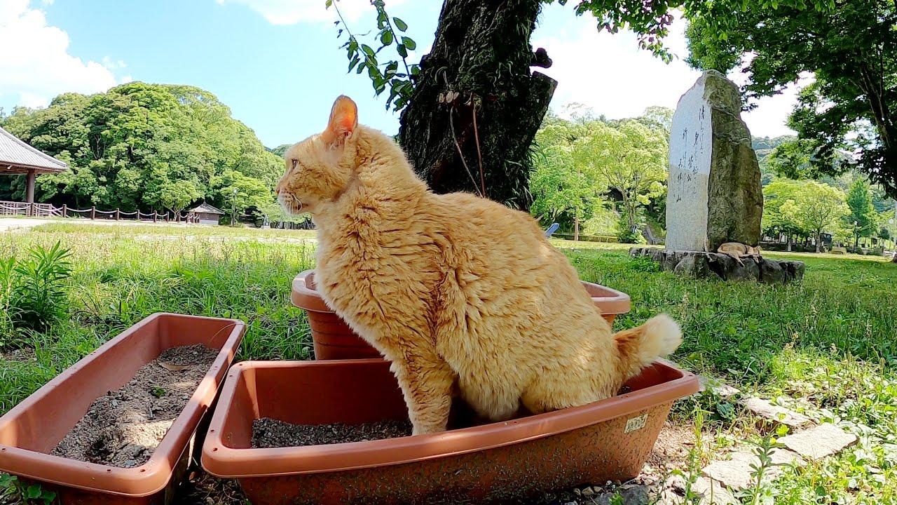 【地域猫活動】決められた場所でトイレをする利口な猫