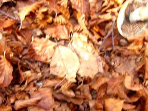 In una gamba sognano con un fungo