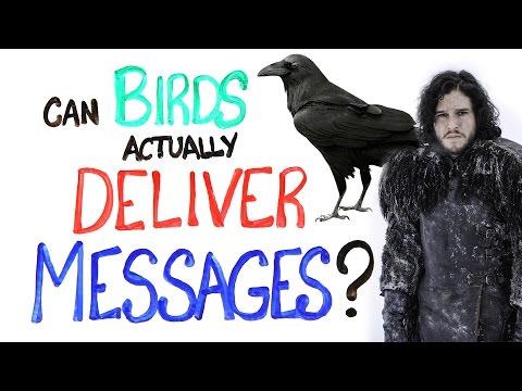 Mohou ptáci doručovat zprávy?
