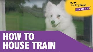 4 Simple Tips For House Training Your Puppy - Dogs Trust Dog School
