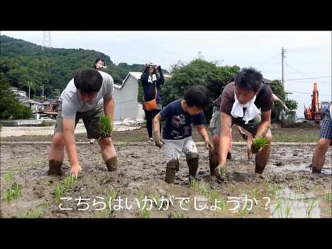2015 田植え体験 山の手学院幼稚園