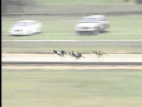 Race 39 Mardi Gras Greyhound Foundation Stake Flite II