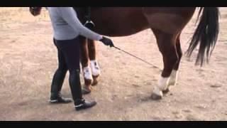 How To Teach A Horse Piaffe  Part I