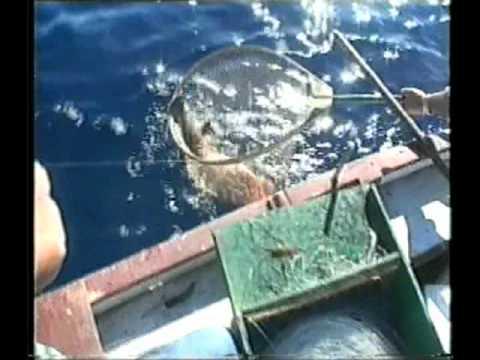 Rivesta linverno con involucro protettivo per Minsk da pesca